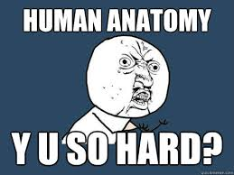 Human Anatomy Meme